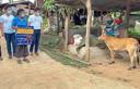 De Thaise Charan Damrongkiatpana houdt een bord omhoog na het winnen van een kalf in de coronaloterij in de provincie Chiang Mai.