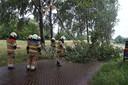 Tak van boom door bliksem inslag in Elshout