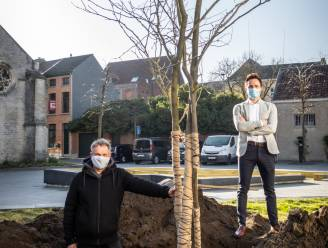 Stad en aannemer komen tot vergelijk over gevelde boom Sint-Katelijnestraat: vier nieuwe bomen als compensatie