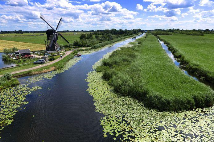 De molen langs de boezem, waar riet groeit. Een wandelpad door het hoge riet leidt naar een kijkwand waarachter een plas met water vol vogels te zien is, inclusief de bloeiende kattenstaarten.