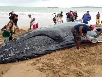 Tientallen Brazilianen stromen toe om samen gestrande walvis te redden