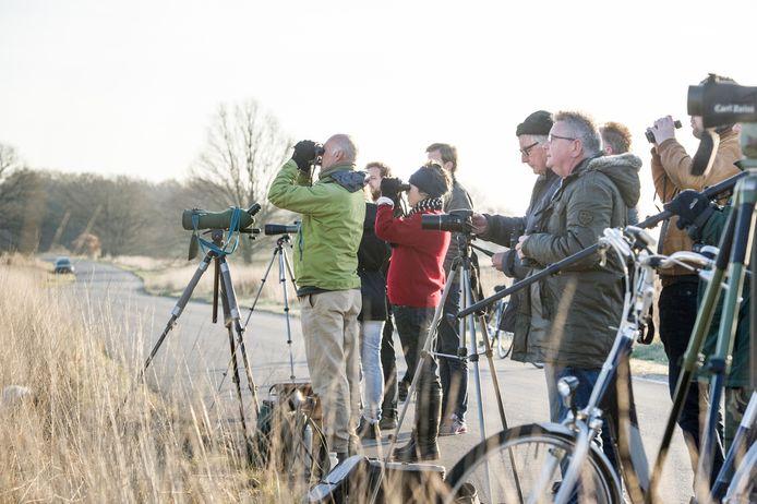 Baltsende korhoenders  trekken al jaren hopen vogelaars op de Sallandse Heuvelrug. Maar als er niks wordt gedaan, verdwijnt het dier voorgoed uit Nederland, vreest de provincie. Het CDA vindt het een beetje onzin.