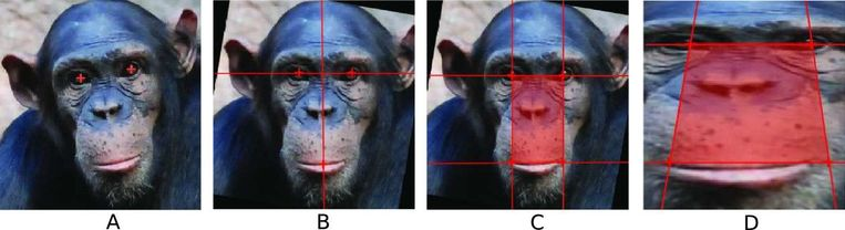 chimp face recognition Beeld *
