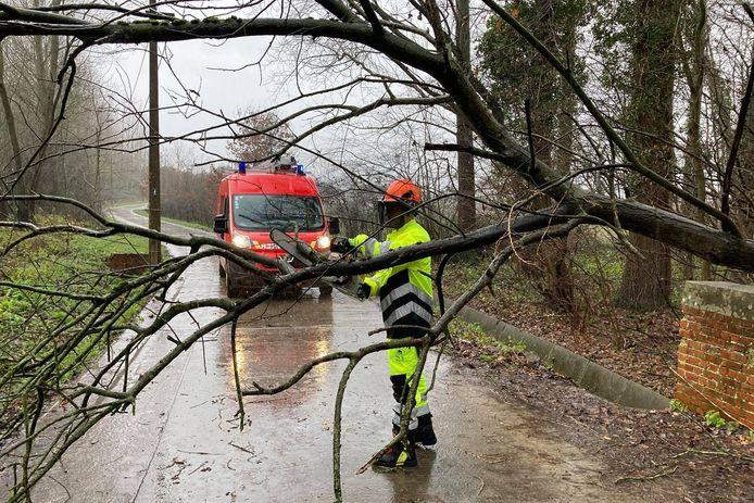 In Cotthem in Sint-Lievens-Houtem kwam een boom dwars over de weg te liggen.