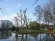 Reigerkolonie uit De Lier letterlijk gevlogen na kortwieken van bomen: 'Raadsel waar ze zijn'