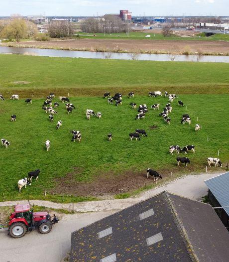 Zwolle zoekt stikstofruimte voor bouw huizen en bedrijven; uitkopen van boeren is belangrijk wapen (weet ook melkveehouder Van de Streek)