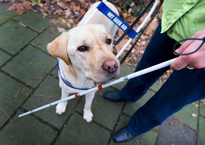 Het Nederlands Herseninstituut doet onderzoek naar hoe ze blinde mensen weer een deel van hun zicht kunnen teruggeven.