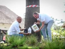 Landal boekt succes met natuurmiddel tegen eikenprocessierups: Is dit het ei van Columbus?