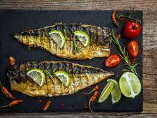 Makreel is ondergewaardeerd visje: 'Het zijn de graatjes'
