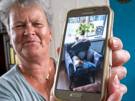 Kater Hummer komt na 2 jaar weer thuis, pijnlijk genoeg drie dagen nadat zijn zus Misty is doodgereden