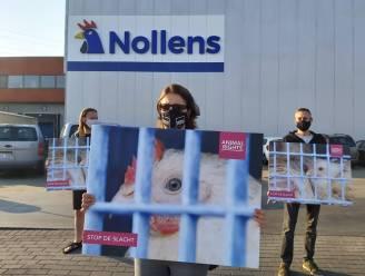 Dierenrechtenactivisten voeren actie aan pluimveeslachterij Nollens in Kruisem