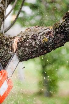 Kwart van bomen langs Strijperpad in Leende gaat om