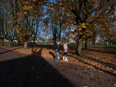 Zieke kastanjes: de laatste oude dames sneven op het Everardusplein