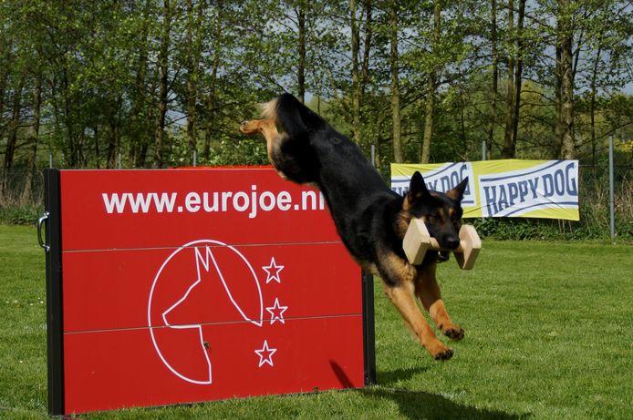 Actiefoto (archief) van de Vereniging van Fokkers en Liefhebbers van Duitse herdershonden in Etten-Leur.