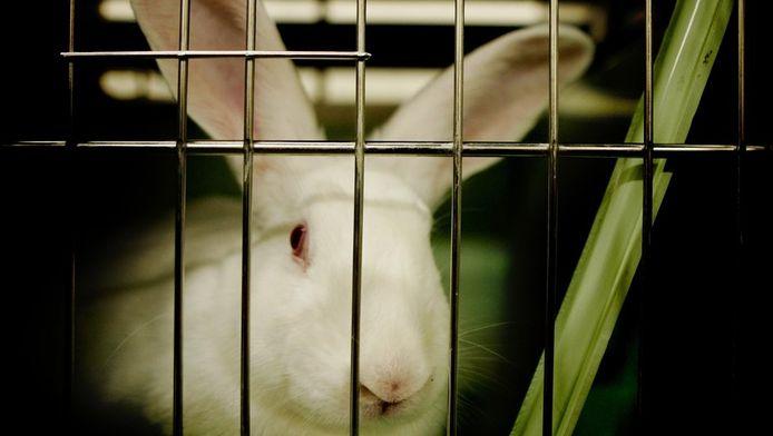 Een konijn in een hokje