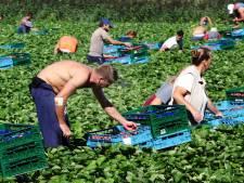 Een bedroevend verhaal, die opvang van arbeidsmigranten in West-Brabant