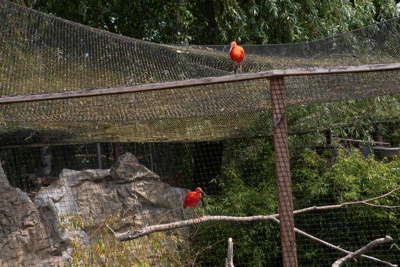 Bezoek van een rode ibis uit Plankendael in Harry Malter park.