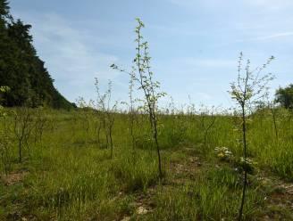 Al miljoen bomen geplant in Vlaanderen sinds aantreden regering