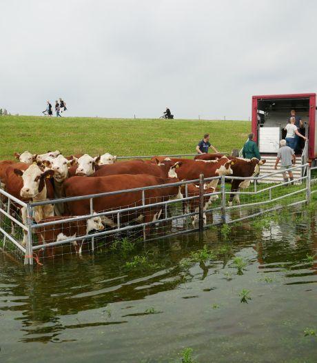 Grote problemen blijven uit na piek in zomerse hoogwatergolf in IJssel