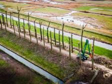 Kort geding en petitie tegen 'illegale kap' van 521 bomen langs de Dordtse Zeedijk