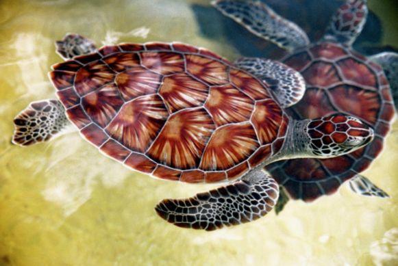 Zeeschildpadden gaven de eilanden hun oorspronkelijke naam Las Tortugas.