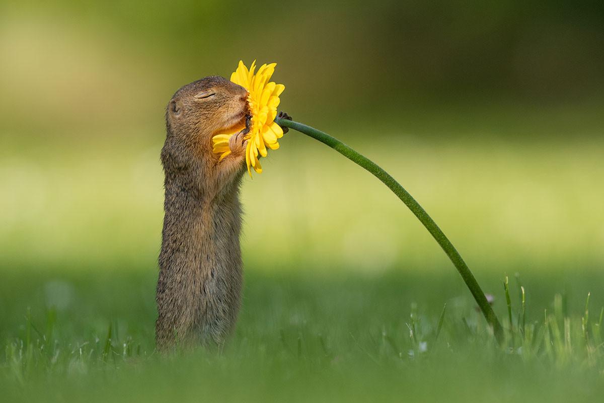 De foto van de eekhoorn die Dick maakte in Oostenrijk gaat de hele wereld over