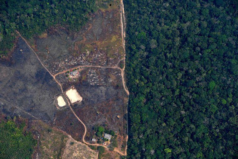 Een platgebrand deel van het Amazonewoud in Brazilië. Beeld AFP