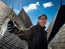 Hoe het dak van de Walburgiskerk in Zutphen in een 'vogelkerkhof' verandert als de lente begint