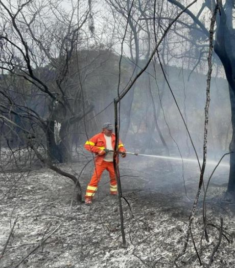 Les pompiers italiens combattent plus de 200 feux de forêt au sud du pays
