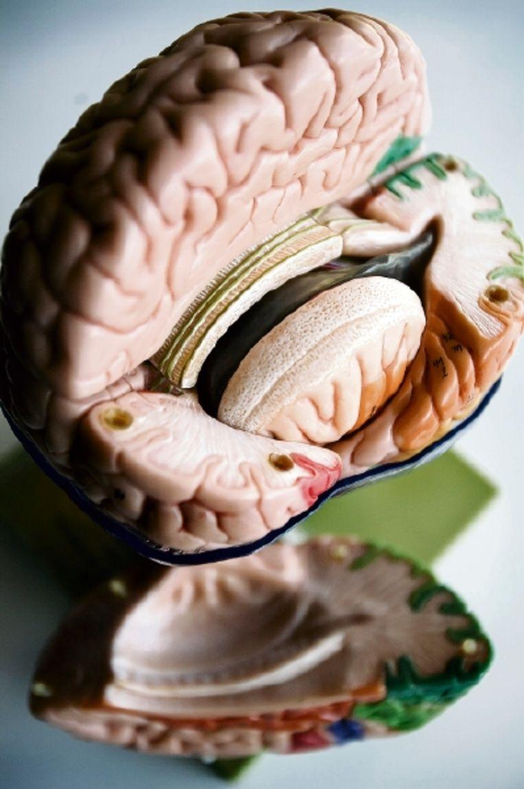 'Ook 'goede daden' stimuleren het genotscentrum in onze hersenen', aldus de Tilburgse neuropsychologe Margriet Sitskoorn. (FOTO'S WERRY CRONE, TROUW) Beeld