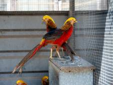 Overbetuwe wil desnoods vogelhokken slopen voor woningbouw in Herveld