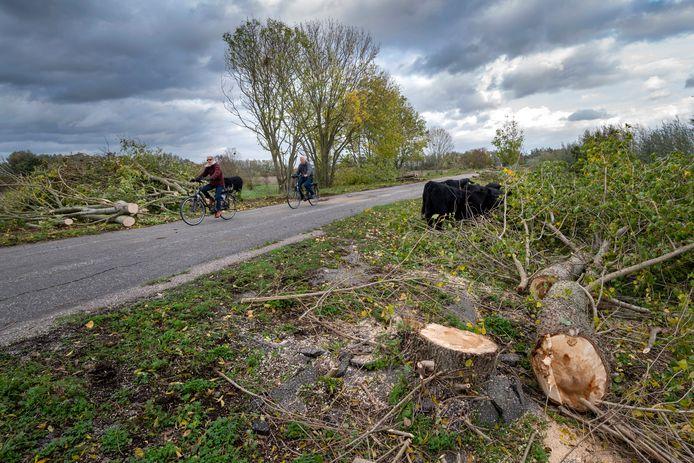 Staatsbosbeheer heeft veel bomen langs de Defensiedijk in Bemmel gekapt.