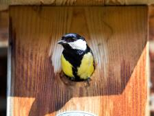 Ook Vught gelooft heilig in nestkasten als oplossing rupsenoverlast