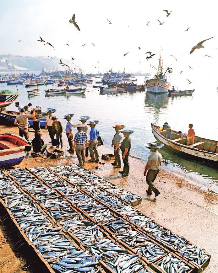 In de haven van Sines brengen dragers de vis nog op de traditionele manier naar de veiling.