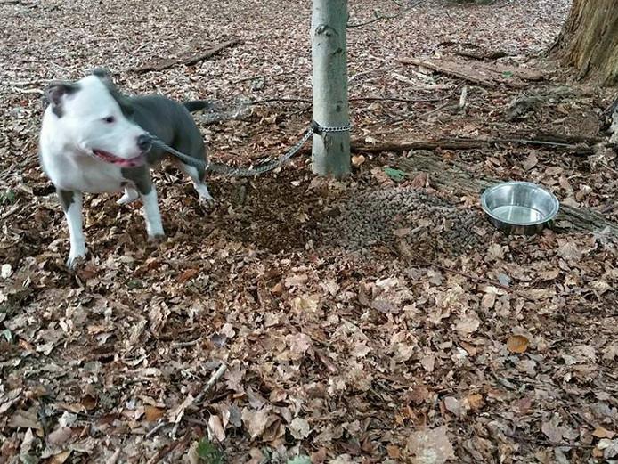 De vastgebonden hond met water en voer in het Liesbos.