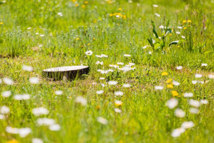 Vaak wordt op een natuurbegraafplaats een graf alleen aangeduid met een stuk hout.