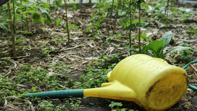 Preventieve maatregelen voor sites waar PFOS-normen mogelijk overschreden worden: eet groenten uit de tuin met mate, laat kinderen niet op terrein spelen