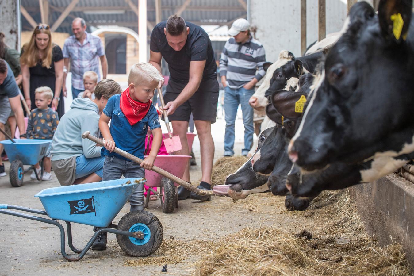Kinderen voeren de koeien in Tricht.