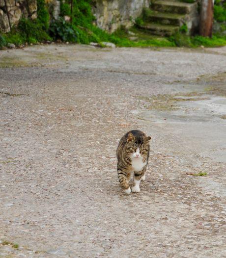 Overlast van poepende en jagende katten in Veghel-Zuid moeilijk te bestrijden