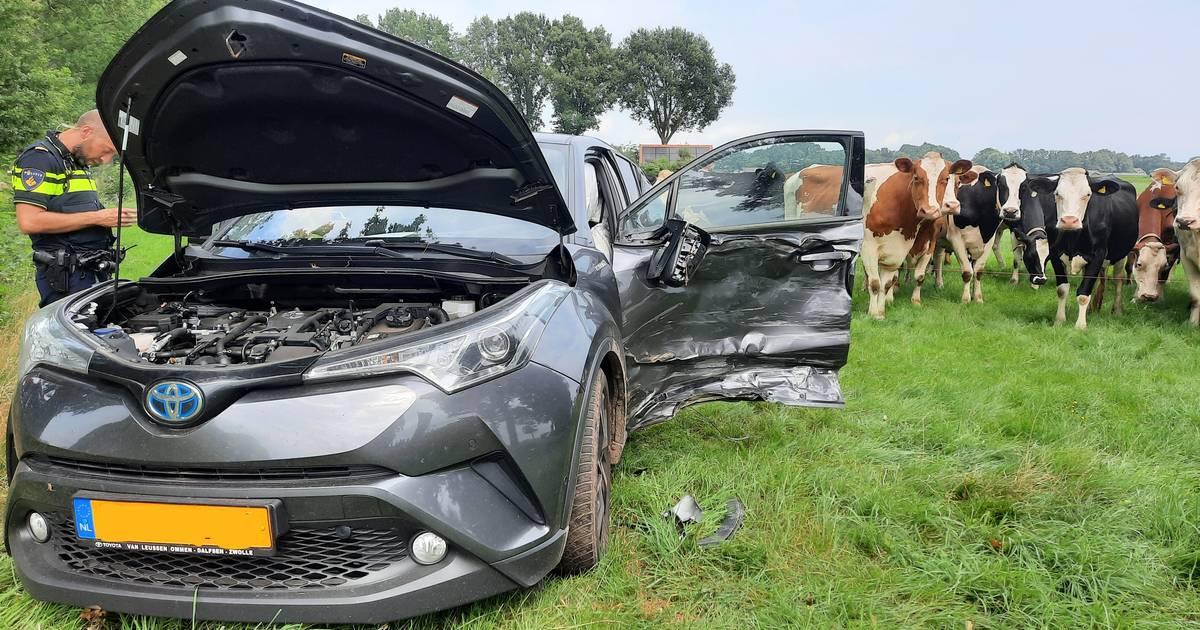 Koeien kijken verschrikt op bij ongeval Vinkenbuurt: auto vliegt weiland in.