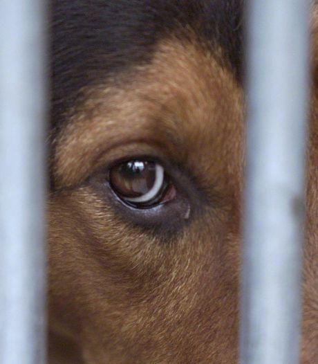 Celstraf voor hondenkweller: bij elke blaf een stroomstoot