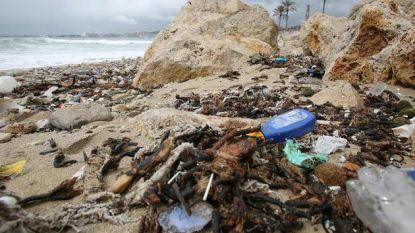 Stranden Palma de Mallorca sterk vervuild: vakantie vieren tussen uitwerpselen en maandverbanden