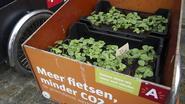 Duizend aardbeiplantjes meten fijn stof in Antwerpen