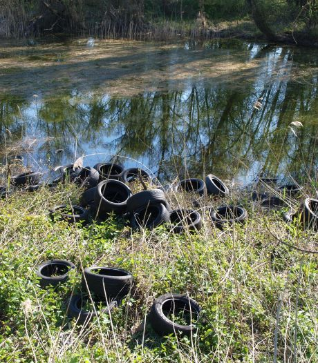 Autobanden bij bosjes gedumpt in de uiterwaarden van Pannerden: 'Kost geld om ze af te voeren'