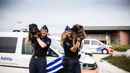 Politie Limburg Regio Hoofdstad schaft nieuwe voertuigen aan voor hondengeleiders en hun viervoetige partner