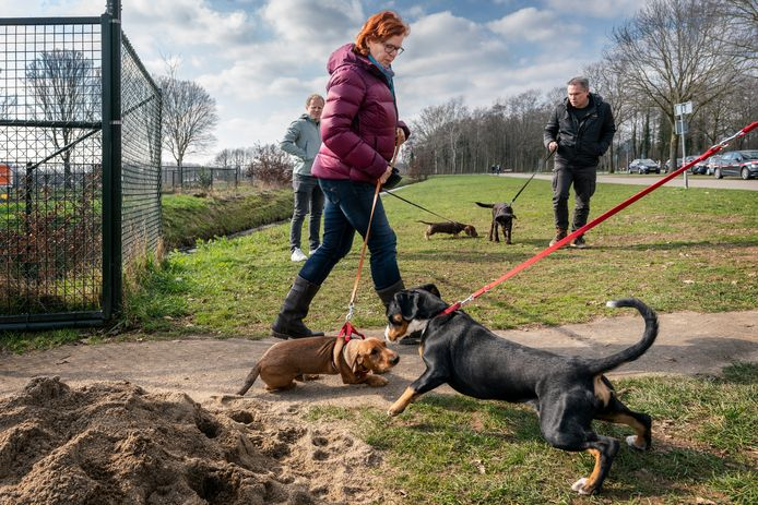 Het beleid voor hondentrainingen in groepsverband is willekeurig en onduidelijk, vinden hondenscholen. In de ene plaats mag het wel, in de andere niet.