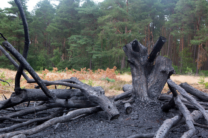In Dalfsen woedde de afgelopen weken meerdere malen brand in bos en heide. De vuurtjes zijn vermoedelijk aangestoken.