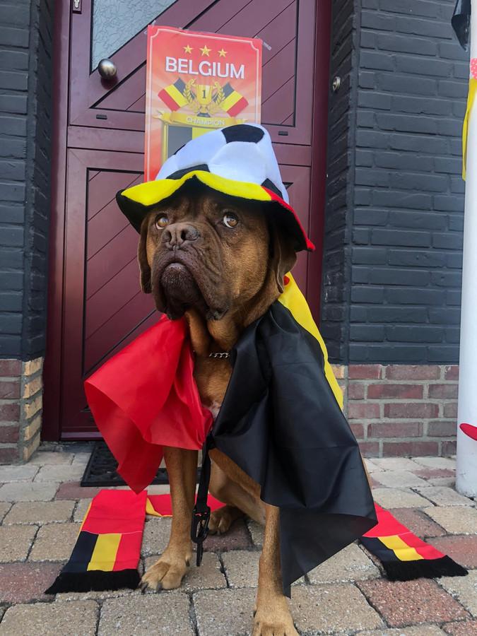 Hond Isa supportert mee voor Rode Duivels