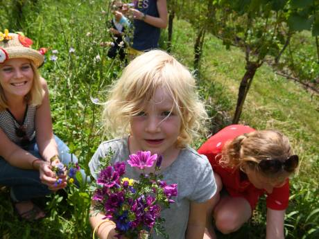 Bloemen plukken in de wijngaard van Erichem