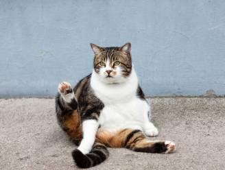 Bijna helft van katten is te dik, zo zet je jouw huisdier op dieet